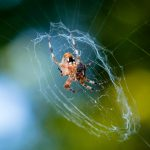Spider drinking a bug